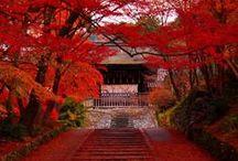 Japan. I <3 It!