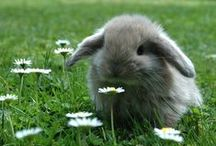 Hamsters, Rabbits and more...