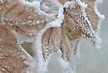 seasons winter / by Margreet Kroon