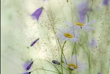 seasons summer / by Margreet Kroon