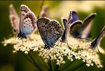 vlinders ( butterflies) / . / by Margreet Kroon