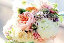 Flowers / Flores lindas