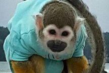 Małpka Fryderyk