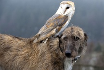 Rare Pals / Rare Friendships In The Animal World / by Suzanne Roper