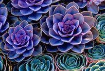 Succulent, Flowers & Garden