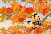 Autumn Colors / The colorful autumn.