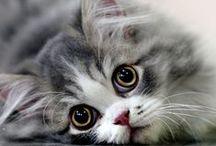 ...here kitty kitty