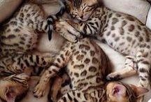 ✿ ⊱ kiscicák
