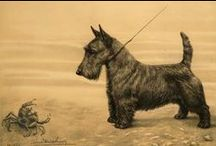 Scottish Terrier - my big love