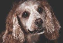 Senior Pets & Pet Care