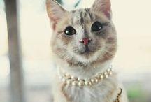 Felines so Fine