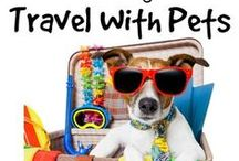 Traveling tips for pets / Ideas for vacations with your pets and tips for making it a good time!