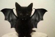 Halloween Pet Fun