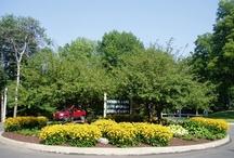 Commercial Landscape Maintenance Service