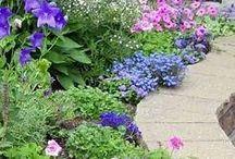 Plants & Gardening / by Irene Good