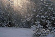 Vinter / Foton på snö och vinter :D