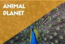 ANIMAL PLANET / I have a thing for animals.