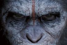 11 Temmuz 2014 Vizyon Filmleri - Sinema - Movie / #Sinema #Movie #Vizyon