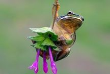 Frogs and other Reptiles