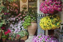 Pinturas flores