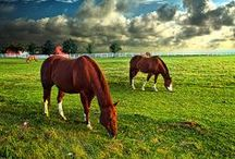 Horses and donkeys