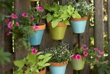 Potted Love / Ideas for using pots in the garden