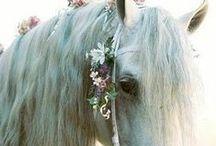 Horses, my life, my everything