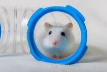 World of Guido / Adventures of a dwarf hamster. Visit http://facebook.com/worldofguido
