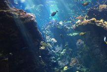 Under the sea ~