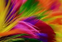 Colours / by Gina Rahmel