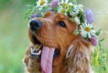 Pets in weddings / Outdoor weddings