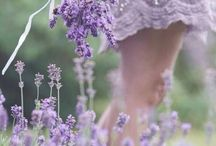| lavender:lover | / by Maura