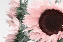 | flower:power |