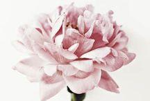 Fleur~ / Sweet
