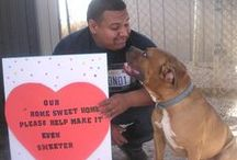 People and animals at C.A.R.E. / Feel the love - humans and cats and dogs