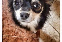 Minù / My little dog