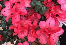 I fiori dei miei giardini