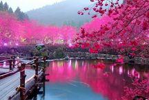 Amazing World! / Beautiful Plant