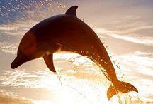 Amazing Animals! / Animal kingdom