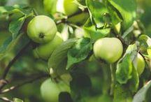Végétarien / Pour partager ses informations et faire connaître le mode de vie des végétariens.  TerraVictoria - food - recette - légume - fruit