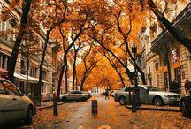 A u t u m n / Leaves, leaves, leaves.