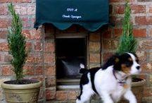 Compassion8 Doggies