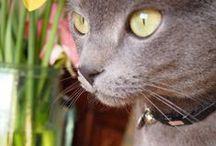 Sone's Photo. < cat >