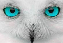 Bird・Inseect