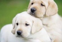 Pups / Adorable Puppies.