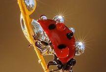 Ladybugs / Colorful Ladybugs.