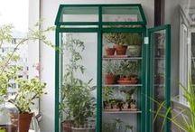 Botanical   Urban Garden / Container gardening ideas, succulents and indoor plants
