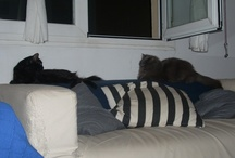 Mi gata y mi exgata / Mi gata Chavela y mi antigua gata Babá (la negra).