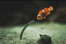 What's Underwater