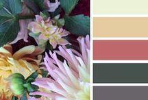 ●•Colour Inspiration•●